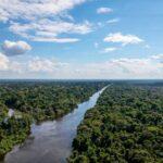 FLORESTA-AMAZONICA-2018.jpg-copy.jpg